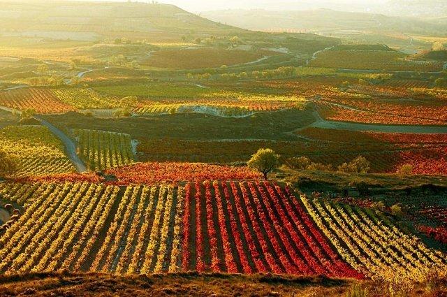 Rượu vang chile được ra đời như thế nào?